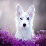 Dreamlike dog portraits by a Polish photographer
