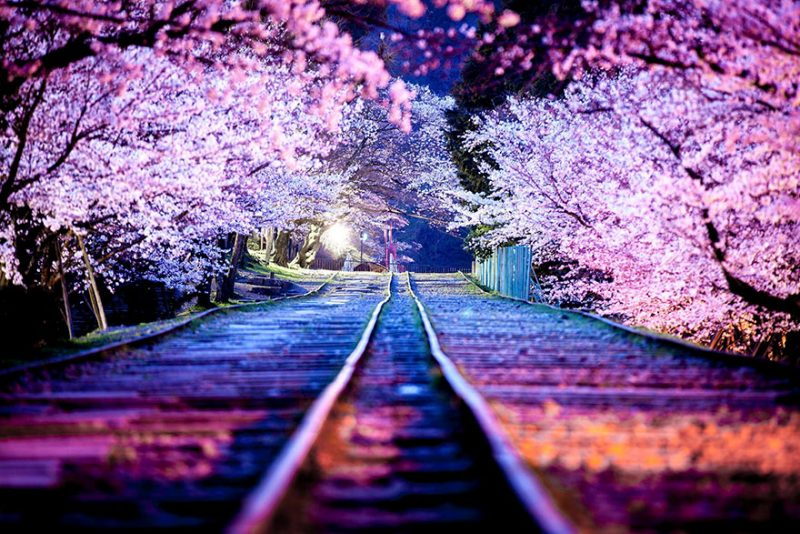 beautiful-impressive-pictures-japan-street-photography-15