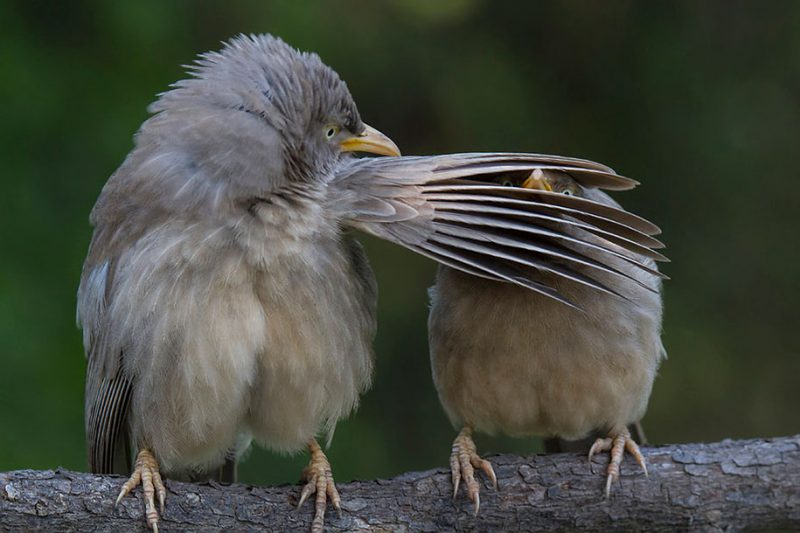 best-photos-comedy-wildlife-photography-awards-2016-11