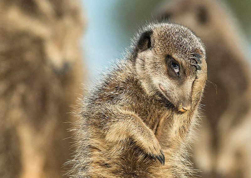 best-photos-comedy-wildlife-photography-awards-2016-5