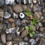 A man collected stones of every letter of the alphabet for 10 years