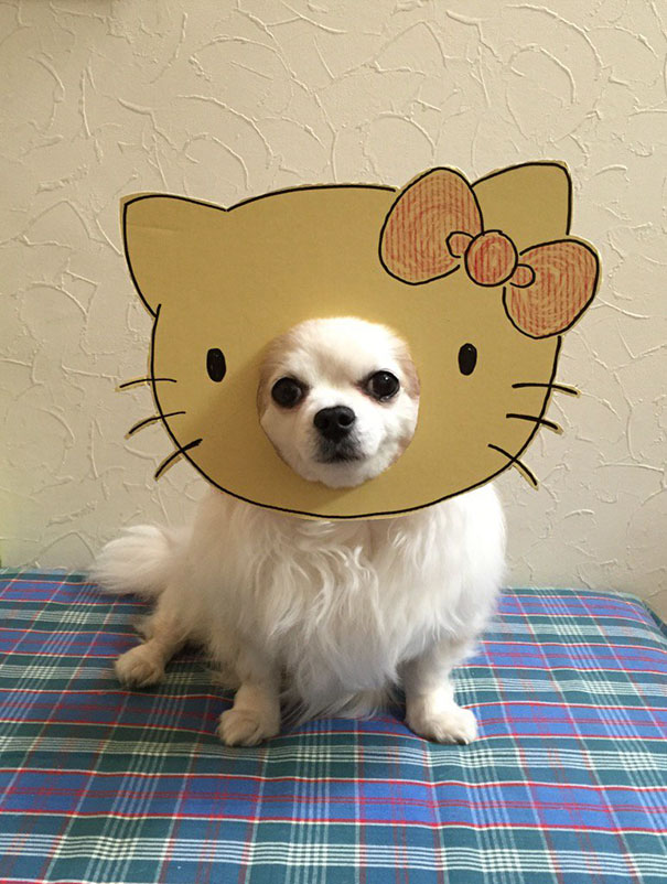 funny-cosplay-dog-costume-cardboard-cutouts-1
