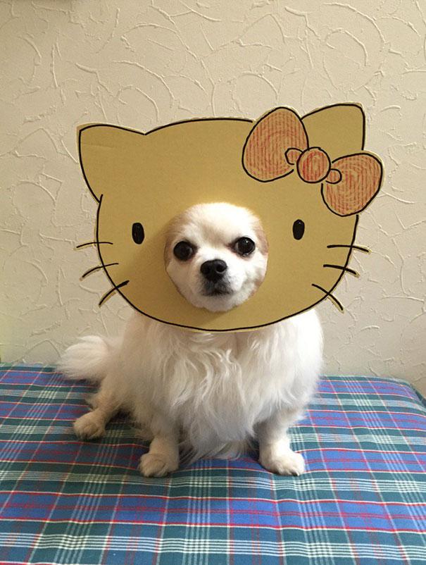 funny-cosplay-dog-costume-cardboard-cutouts-1