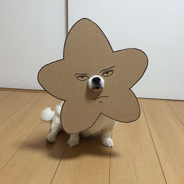 funny-cosplay-dog-costume-cardboard-cutouts-10