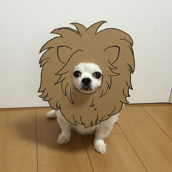 funny-cosplay-dog-costume-cardboard-cutouts-12