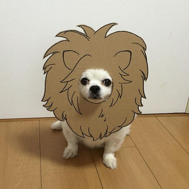 funny-cosplay-dog-costume-cardboard-cutouts-12