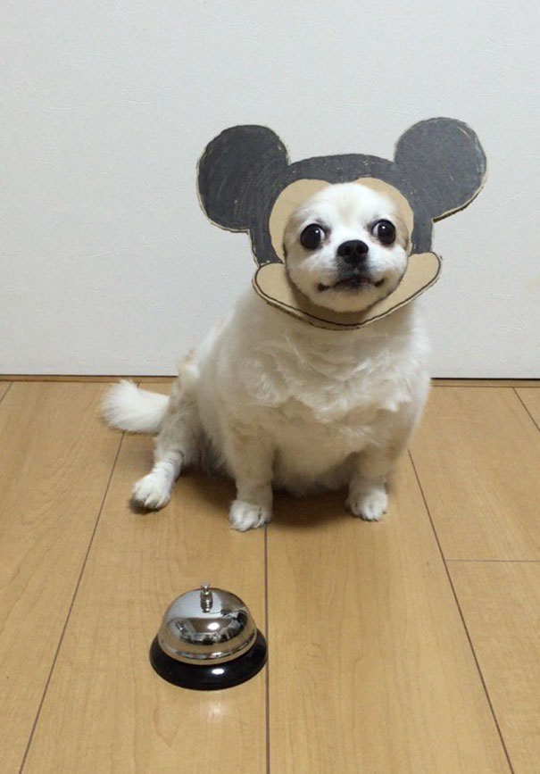 funny-cosplay-dog-costume-cardboard-cutouts-13