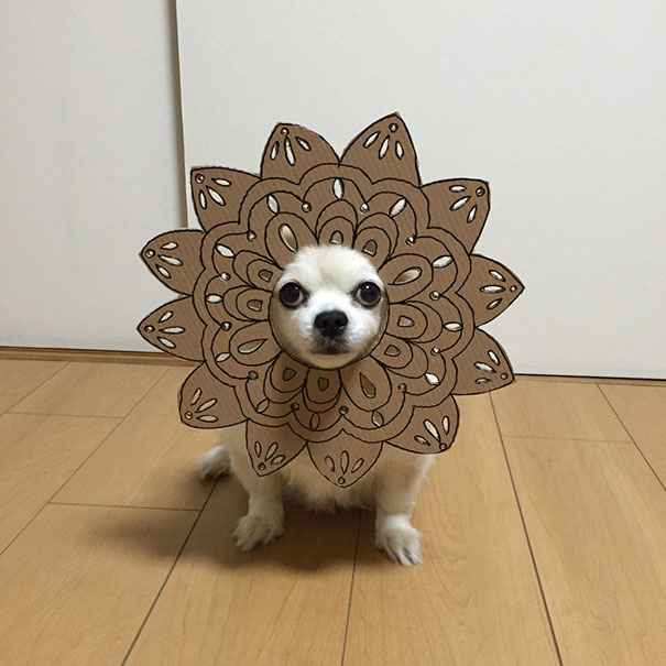 funny-cosplay-dog-costume-cardboard-cutouts-14