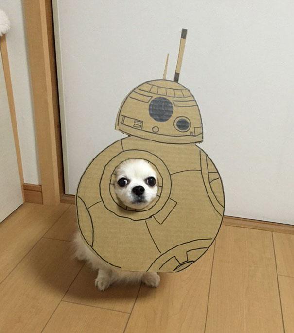 funny-cosplay-dog-costume-cardboard-cutouts-3