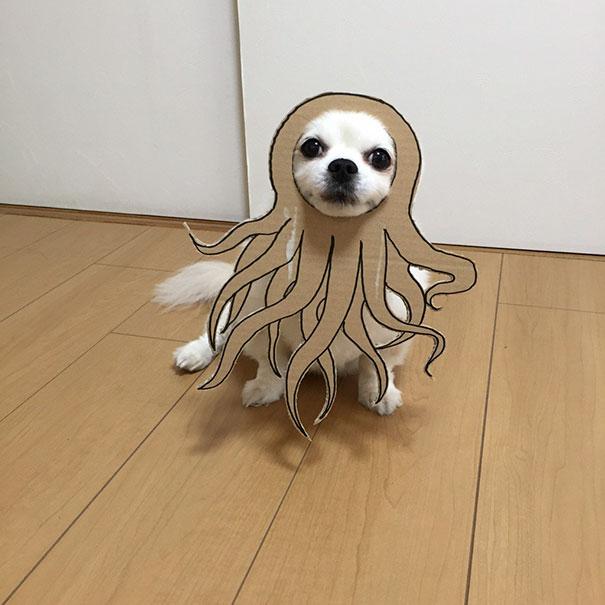 funny-cosplay-dog-costume-cardboard-cutouts-7