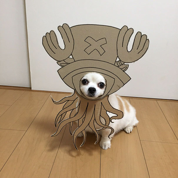 funny-cosplay-dog-costume-cardboard-cutouts-8