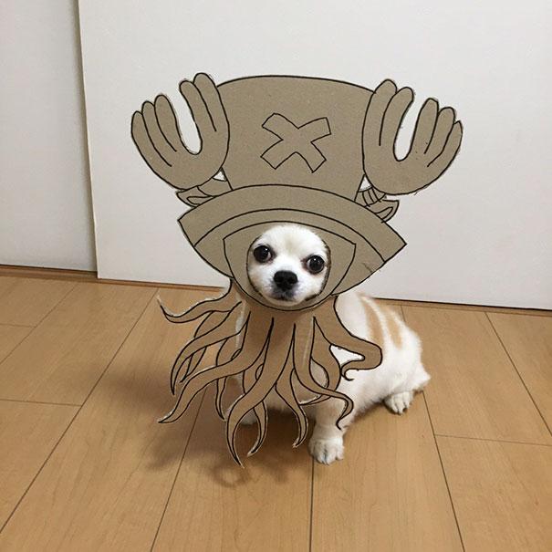 funny-cosplay-dog-costume-cardboard-cutouts-8