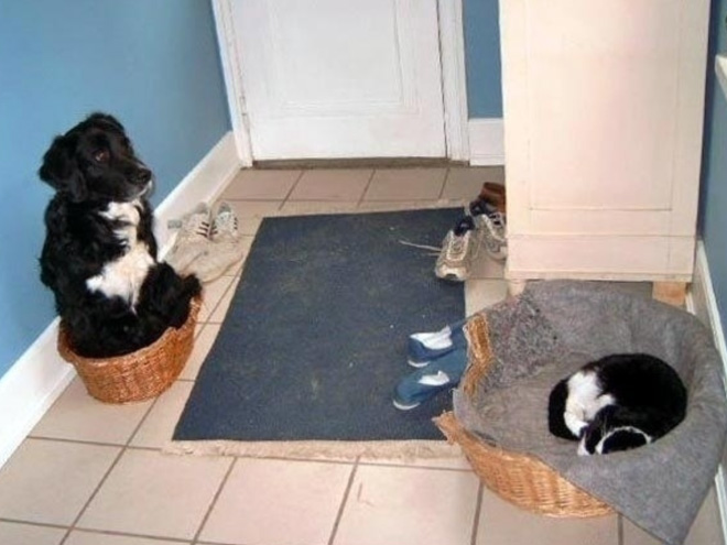 hilarious-funny-photographs-of-cats-steal-dogs-bed-10