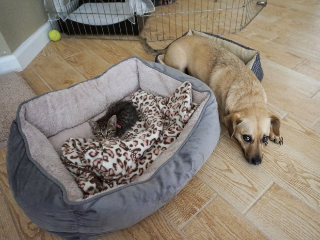 hilarious-funny-photographs-of-cats-steal-dogs-bed-14