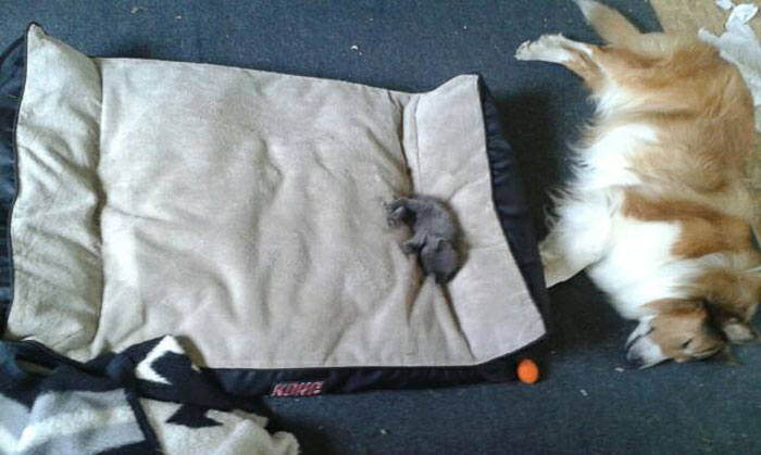 hilarious-funny-photographs-of-cats-steal-dogs-bed-18