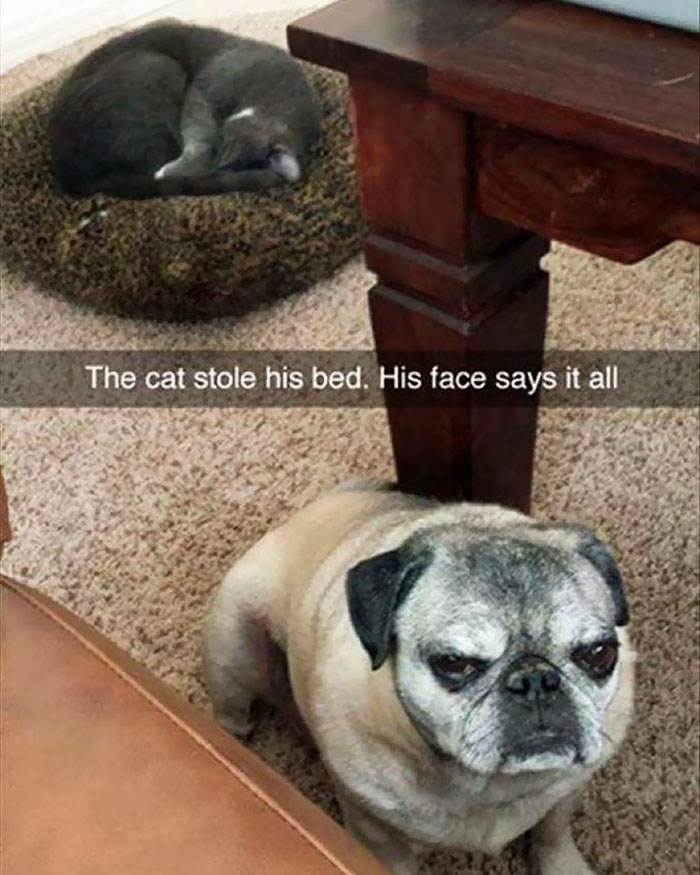 hilarious-funny-photographs-of-cats-steal-dogs-bed-19