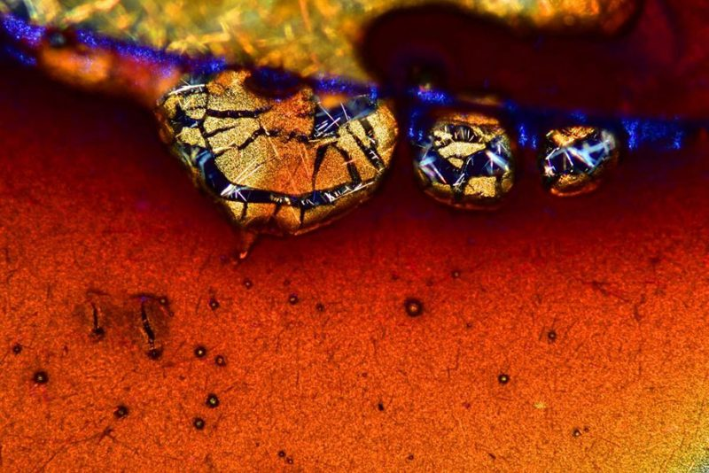 nikon-small-world-photo-contest-macrophotography-competition-11