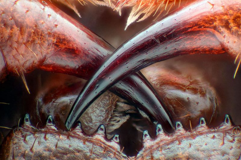 nikon-small-world-photo-contest-macrophotography-competition-12