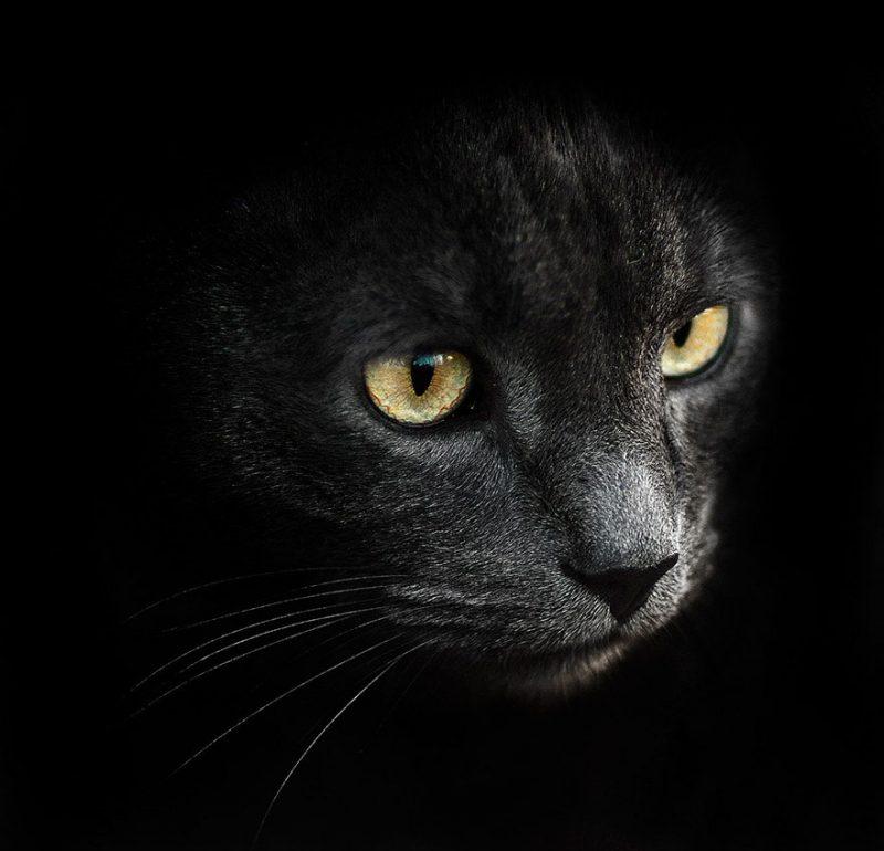 beautiful-intimate-animal-portraits-photography-12
