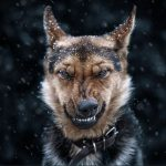 Beautiful and intimate animal portraits shot by Ukrainian Photographer Sergey Polyushko