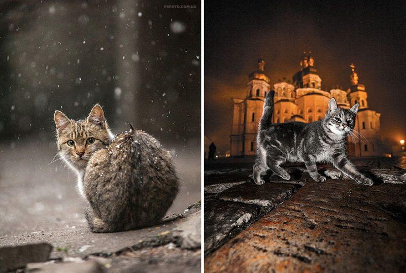 beautiful-intimate-animal-portraits-photography-18