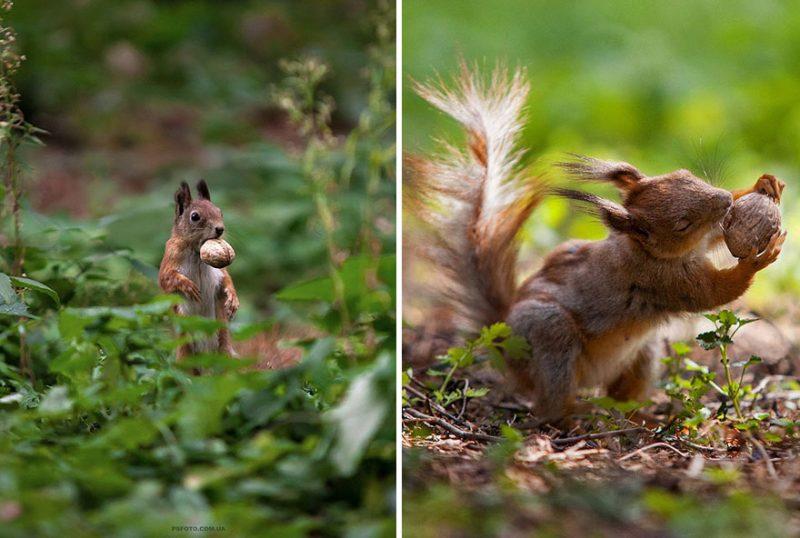 beautiful-intimate-animal-portraits-photography-19