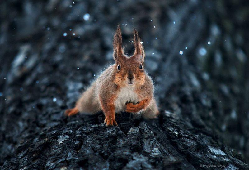beautiful-intimate-animal-portraits-photography-8