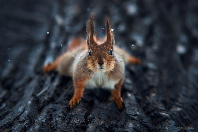 beautiful-intimate-animal-portraits-photography-9