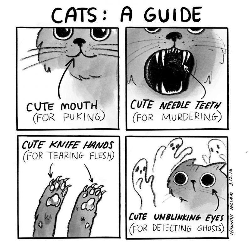 funny-cat-comics-illustrations-2