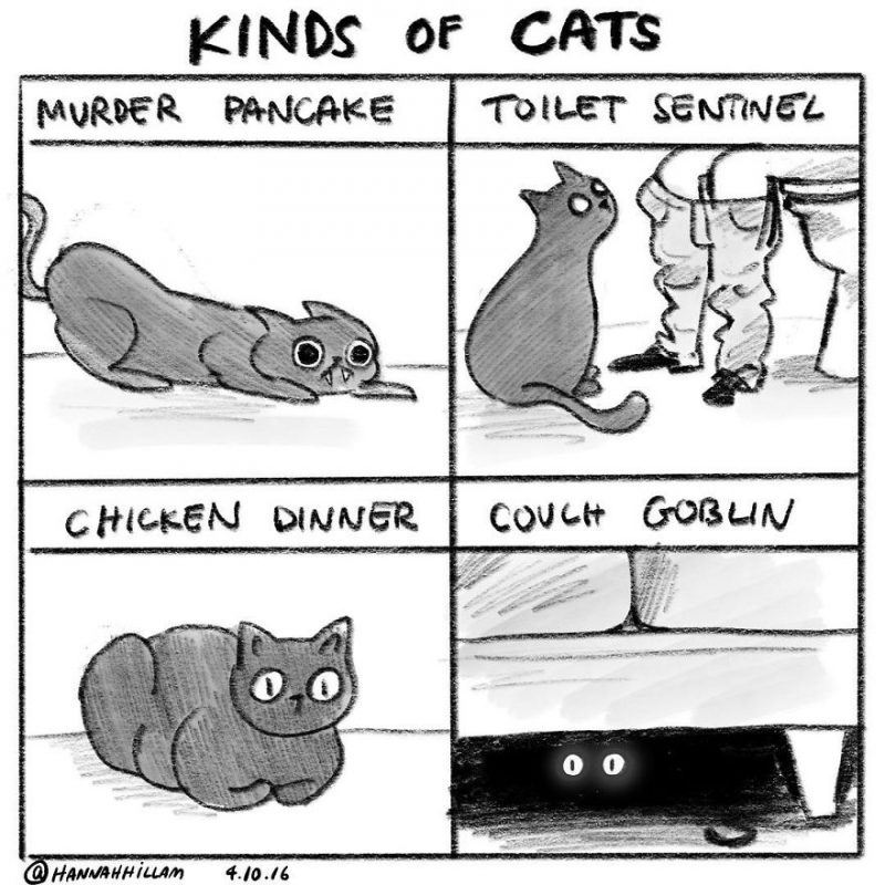 funny-cat-comics-illustrations-4