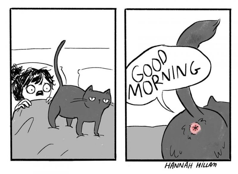 funny-cat-comics-illustrations-9