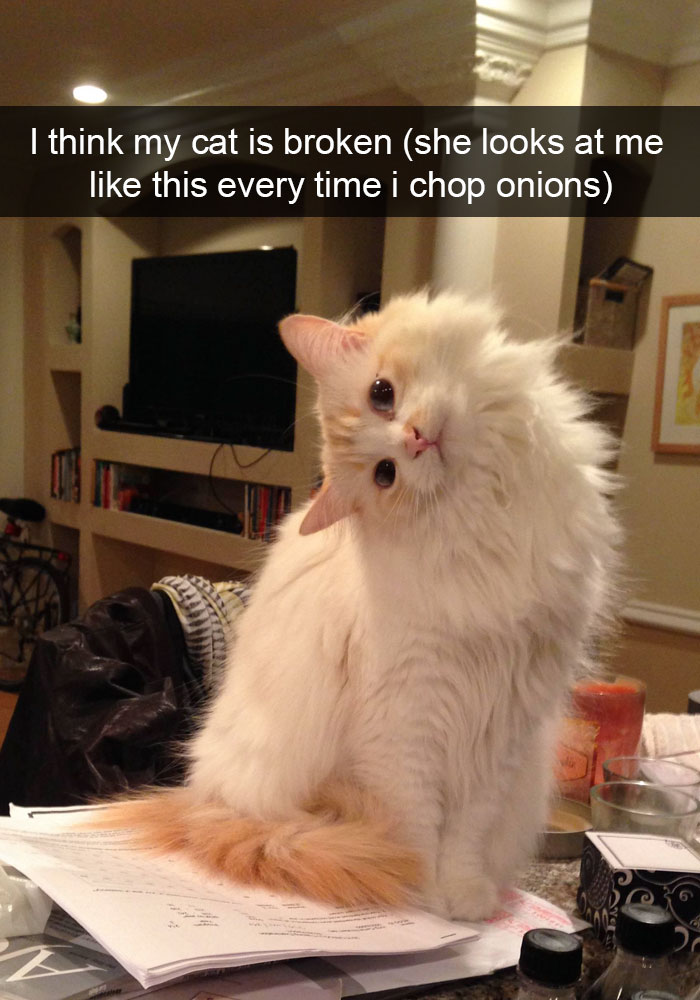 hilarious-funny-cat-humorous-snapchats-pictures-1
