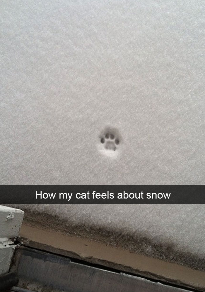hilarious-funny-cat-humorous-snapchats-pictures-11