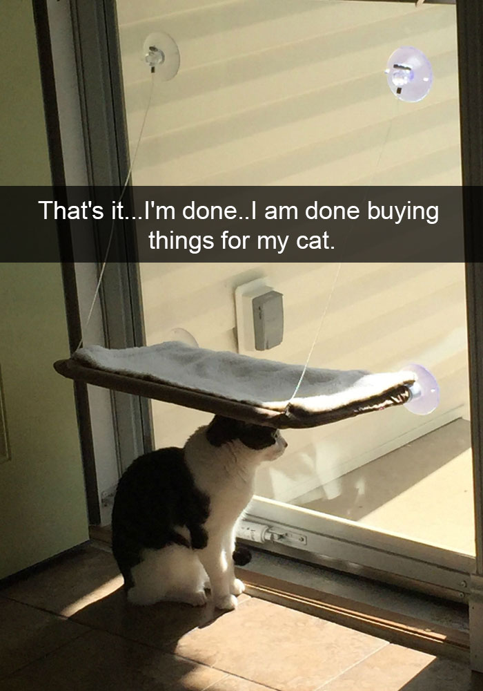 hilarious-funny-cat-humorous-snapchats-pictures-12