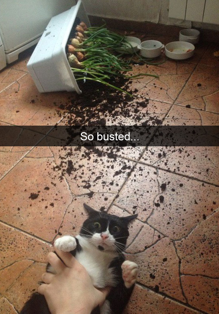hilarious-funny-cat-humorous-snapchats-pictures-13