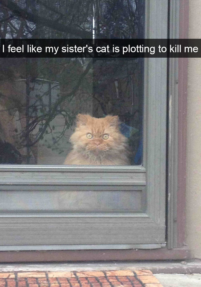 hilarious-funny-cat-humorous-snapchats-pictures-18