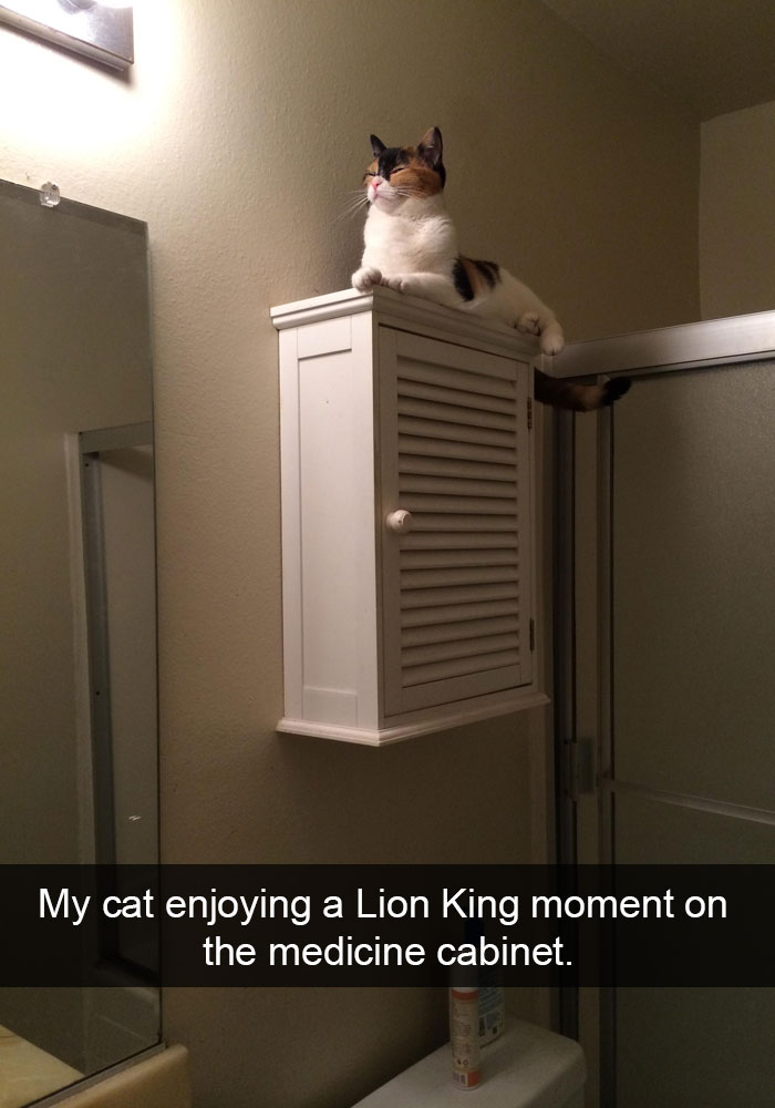 hilarious-funny-cat-humorous-snapchats-pictures-19