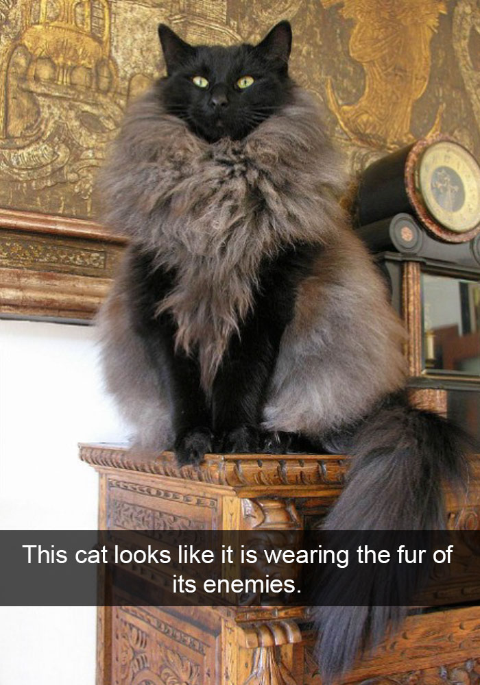hilarious-funny-cat-humorous-snapchats-pictures-20