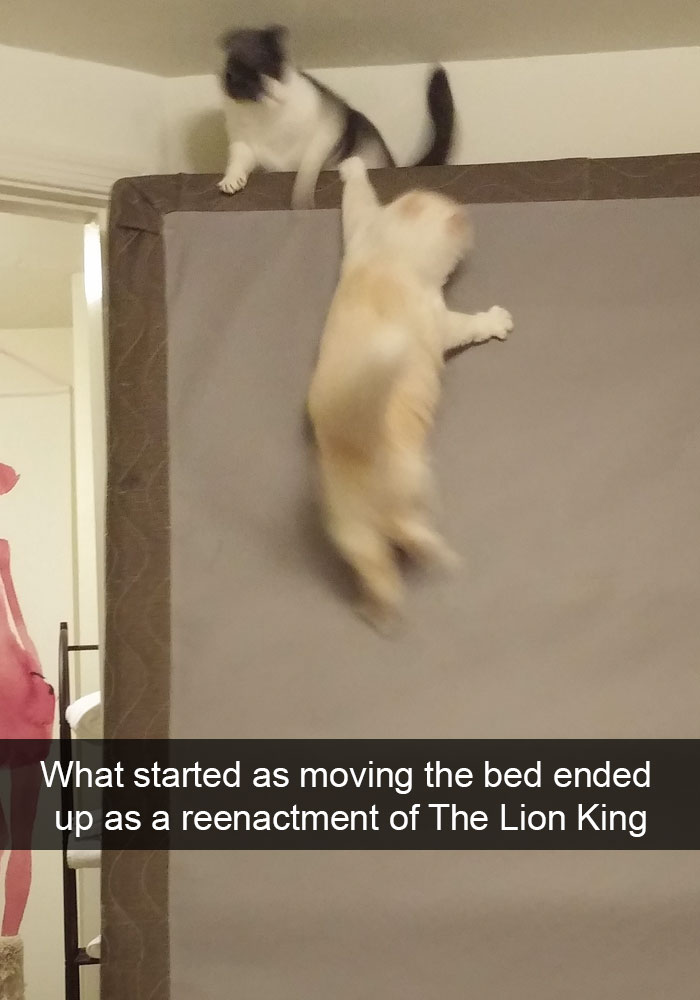 hilarious-funny-cat-humorous-snapchats-pictures-21