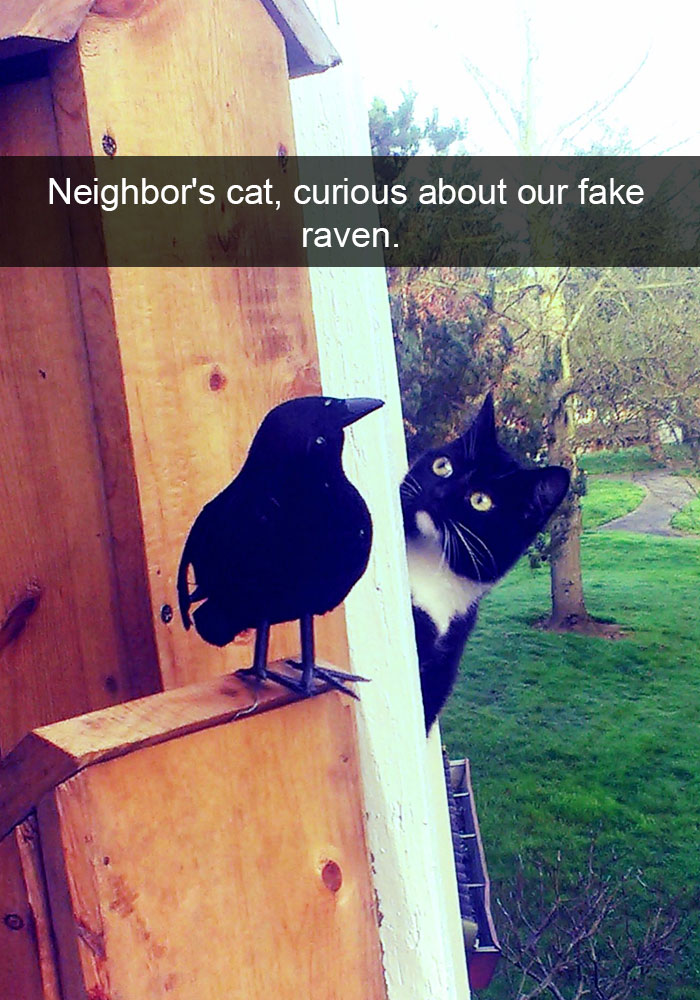hilarious-funny-cat-humorous-snapchats-pictures-22