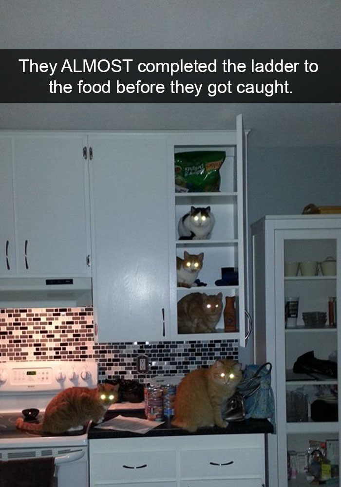 hilarious-funny-cat-humorous-snapchats-pictures-23
