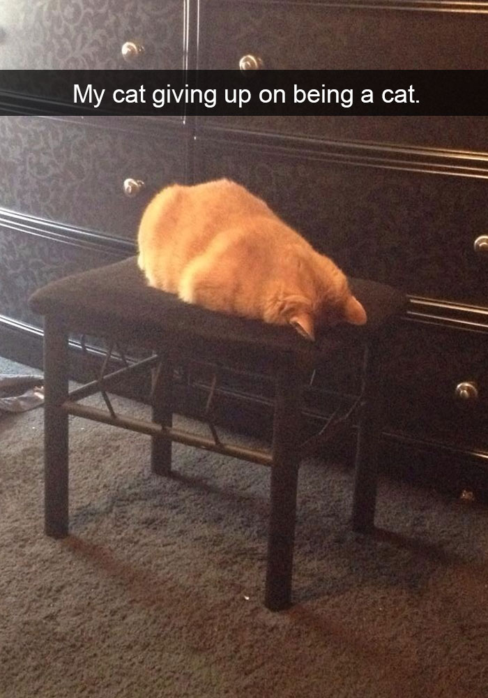 hilarious-funny-cat-humorous-snapchats-pictures-24
