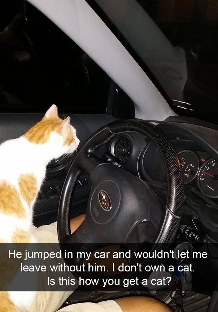 hilarious-funny-cat-humorous-snapchats-pictures-25