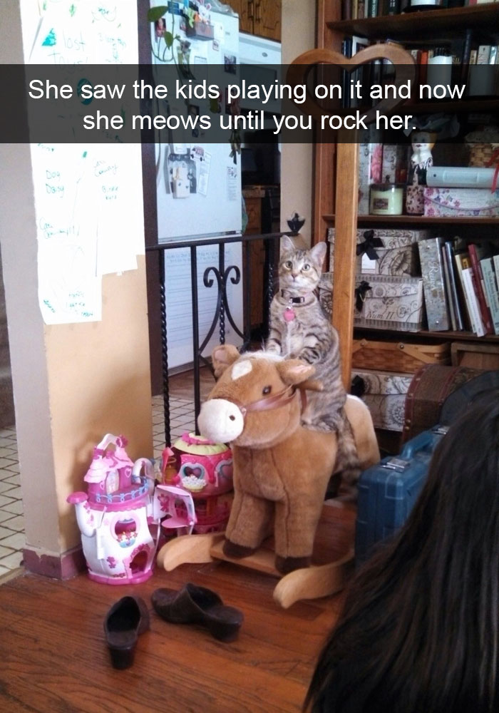 hilarious-funny-cat-humorous-snapchats-pictures-30