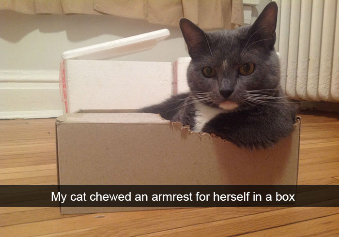 hilarious-funny-cat-humorous-snapchats-pictures-5