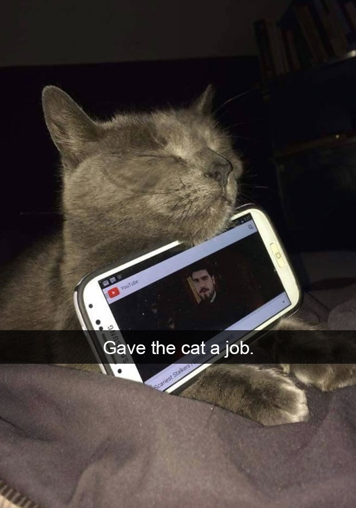 hilarious-funny-cat-humorous-snapchats-pictures-7