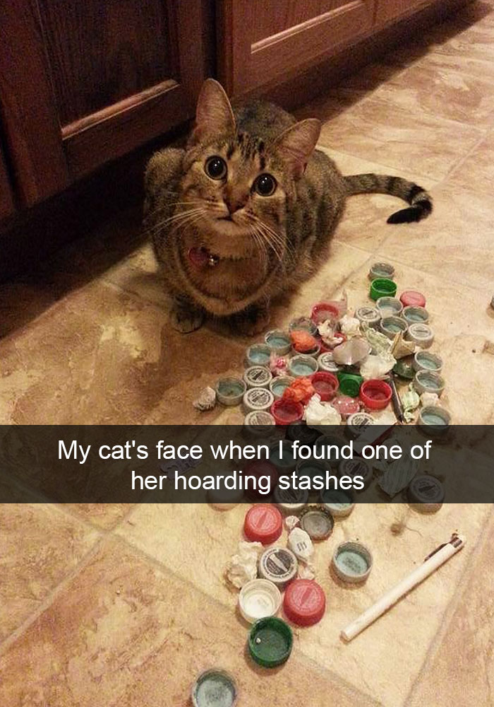 hilarious-funny-cat-humorous-snapchats-pictures-8