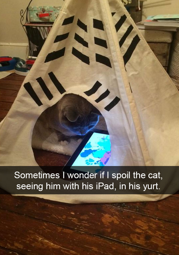 hilarious-funny-cat-humorous-snapchats-pictures-9