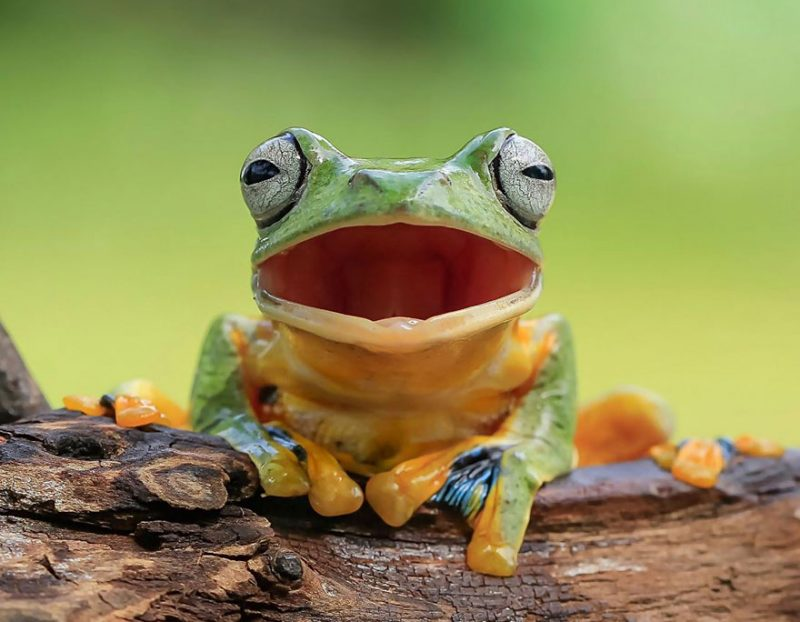 nature-photography-funny-frog-pictures-1