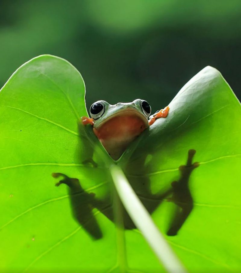 nature-photography-funny-frog-pictures-10
